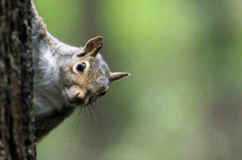 Squirrel Control
